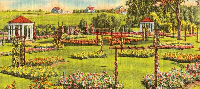 Visit the Allentown Rose Gardens, Lehigh Valley, PA